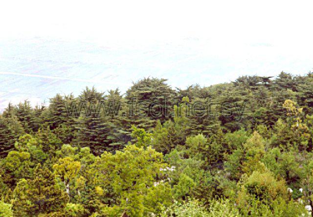 The high mountainous zone